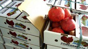 صادرات-میوه-به-عمان