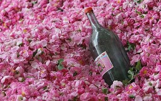 صادرات گلاب
