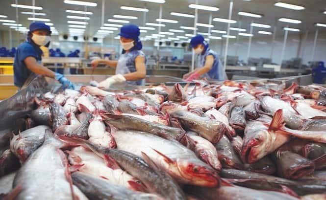 صادرات ماهی