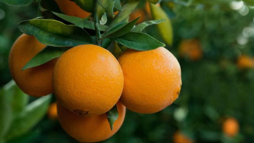 صادرات پرتقال